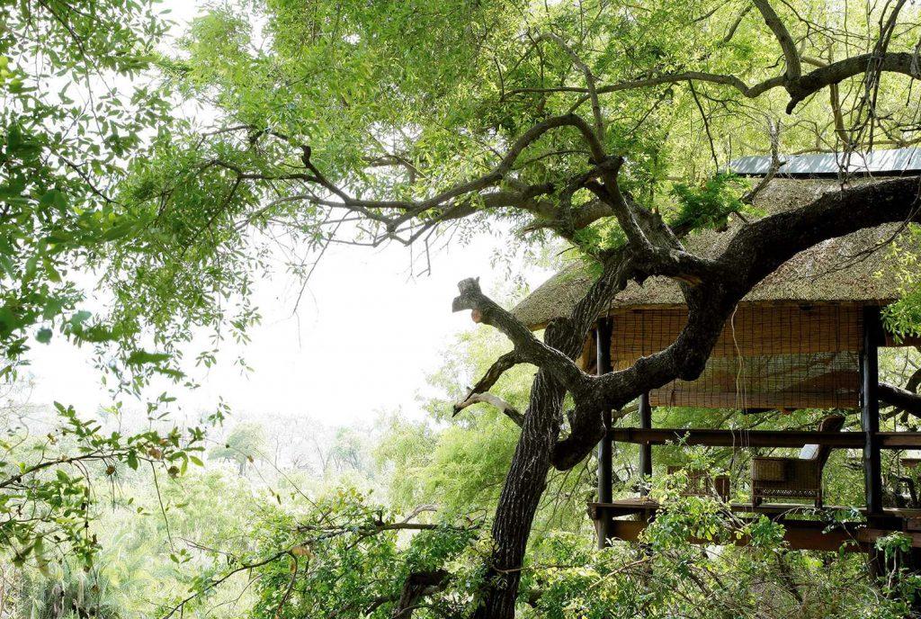 londolozi treehouse